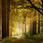ZumeWalk in the woods